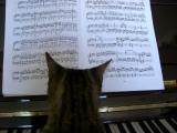 Musique de la semaine : concerto pour piano et orchestre n°3 deBeethoven